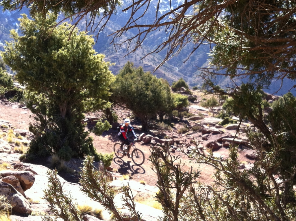 Picture of a bike rider passing through the trees high in the Atlas Mountains
