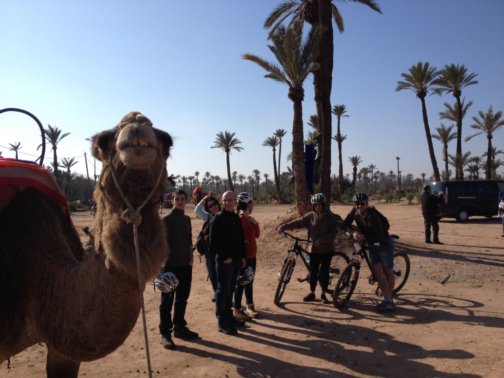 Image of a camel and in the background bike tour customers of AXS